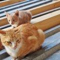 猫の避妊手術はした方がいい?そのメリット・デメリットについて