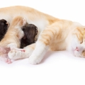猫が妊娠した時の見分け方
