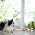 猫と快適に暮らすインテリアコーディネートのコツとは