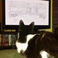 母は育児放棄の保護猫…今は猫アニメがお気に入りのにゃんこに成長!