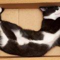 なぜ猫たちは箱を好むのか?!