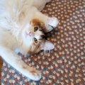 『幸福感の高い猫』がする行動4選