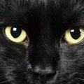 暗闇で猫の目が光るのはどうして?知らなかった目の事
