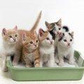 子猫が便秘になる4つの原因とその解消法