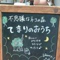 猫カフェ「てまりのおうち」その人気の秘密とは!