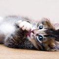 猫が「ぐるにゃん」と鳴く6つの気持ち