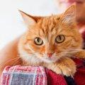 猫がやきもちや嫉妬をしている時にする7つの行動