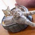 猫同士に仲良くしてもらう飼い方の秘訣5選