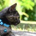 猫の安全な首輪の選び方!おすすめ商品3選