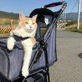 猫の散歩を考える〜散歩をさせたい場合の注意点4つ〜