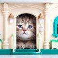 屋外用の猫ハウスの良い点と作り方