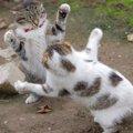 「参りました!」猫が降参した時の3つのサイン