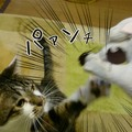 猫とネズミでおしょうがチュ♡愛猫と一緒に作る子年の年賀状