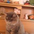 飼い主さんを起こしにきた猫ちゃん、最後はなぜだかごめん寝
