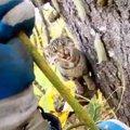 絶望的に高い木の上から猫の叫び声…困難な救助の行方は?