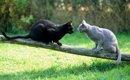 猫が威嚇するのはなぜ!?知っておきたい理由と対策について