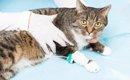 猫の腎不全が末期な時の症状や余命、日頃のケア