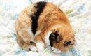 三毛猫のオスについて その値段は数千万!