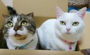 狭いところが好き!居心地がいい箱をお互いに譲らない猫