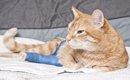 猫にホットカーペットは危険!ホットカーペットの意外な危険性