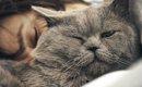猫が飼い主と一緒に寝たい時にする5つの仕草