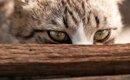 猫が「信頼できる人なのか」を見極めている3つのポイント