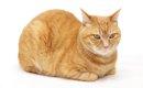 茶トラってどんな猫?性格と特徴について
