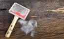 毛が抜けない猫種のオススメのご紹介