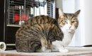 猫の寒さ対策での注意点4つ!本当に過ごしやすいお部屋の作り方