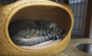 【たまきちゃんシリーズ】どんな夢見てたの?うなされて飛び起きる猫