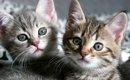初めて猫を飼うなら!まずは正しい知識を身につけよう!