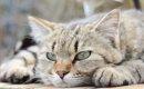 猫が飼い主に冷たい態度を取る3つの理由