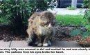 野良猫として過酷な日々を送ってきた猫 保護され別の猫のような顔つ…