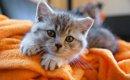 猫のサインで気持ちを読み取ろう!体の状態や仕草、愛情を伝える方法