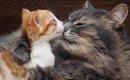 猫は愛情深い生き物!その母性と父性について