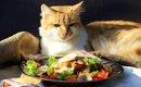 猫が食べてはいけないもの 10種の危険食品