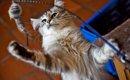 長寿な猫が持つ6つの特徴