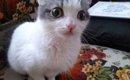 飼い主急死でシェルターに持ち込みされた猫に迫る安楽死の危機!