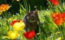 死亡する事も…チューリップが猫に危険な理由