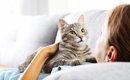 猫が人の身体に乗ってくるときの心理とは?5つの理由とその対処法