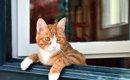 猫の室内飼いはストレスを感じる?快適に暮らせるための4つの方法