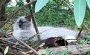 猛暑の中公園に捨てられていた盲目の猫。前向きに生きる姿に胸を打た…