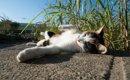 三毛猫の価格はどれくらいかご存知ですか?