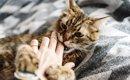 【50代女性が死亡】猫からも感染の恐れあり?!マダニ感染症(SFT…