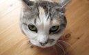 """「喧嘩は止めるニャ~!」大声で夫婦ケンカ中、足元にやってきた猫""""タ…"""