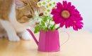 猫に嫌われる匂いはこれ!ベスト5選~実は嫌いだった匂い~