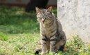 猫の糞に困った時に効果的な対策や処理方法・撃退グッズについて
