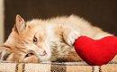 猫にモテモテになる4つの方法