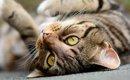 猫のスピリチュアルな言い伝え