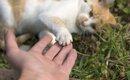猫が飼い主にわざとする8つの行動と心理